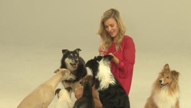 "Joanna Krupa o programie ""Misja Pies"""