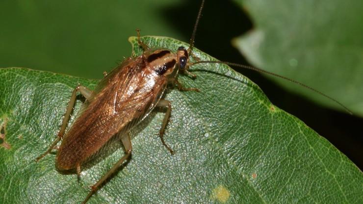Nazwij karalucha imieniem ex. W Walentynki zjedzą go mieszkańcy zoo