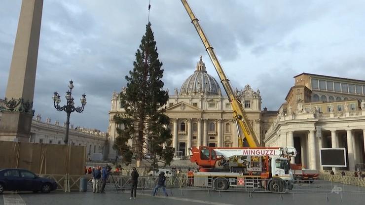 Wyjątkowa choinka i szopka w Watykanie. Przypominają o katastrofalnych nawałnicach