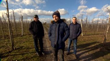 Poszkodowani sadownicy z Mazowsza. Starty wyliczają na 600 tys. zł