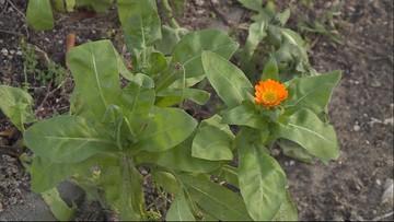 Grzyby rosną, kwiaty kwitną. Eksperci alarmują: ucierpi na tym i przyroda, i gospodarka