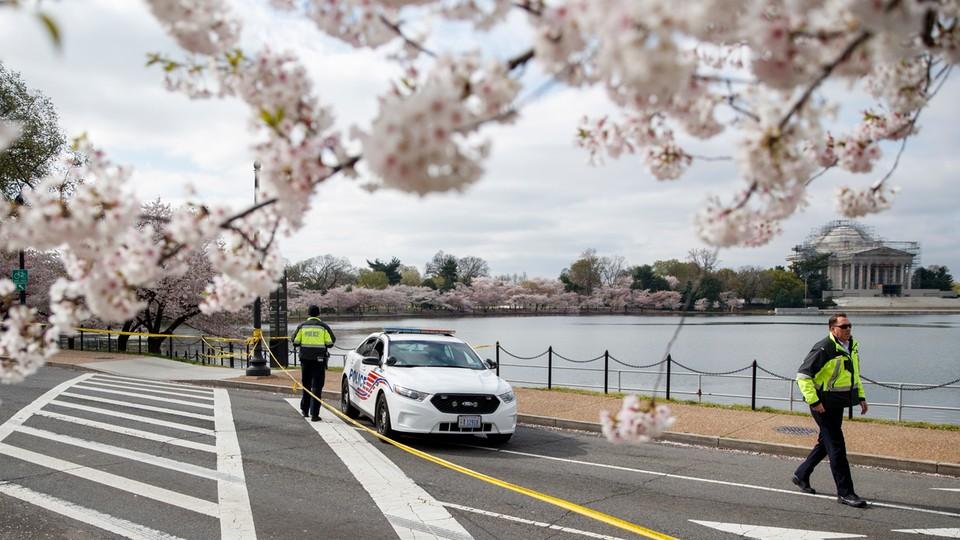 Epidemia w cieniu kwitnącej wiśni. Magda Sakowska o codzienności w USA