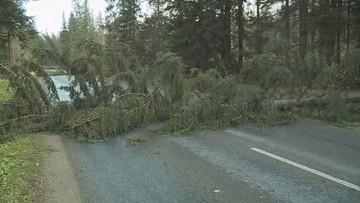 Silny wiatr w Małopolsce. Blisko 150 interwencji straży pożarnej