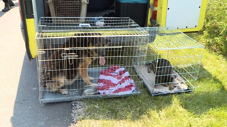 """Radysy: martwe psy w schronisku dla zwierząt. """"Wiele z nich ma udar słoneczny"""""""