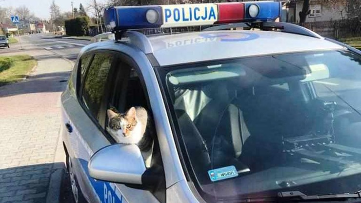 Kot z radiowozu podpatrywał taktykę służby drogówki