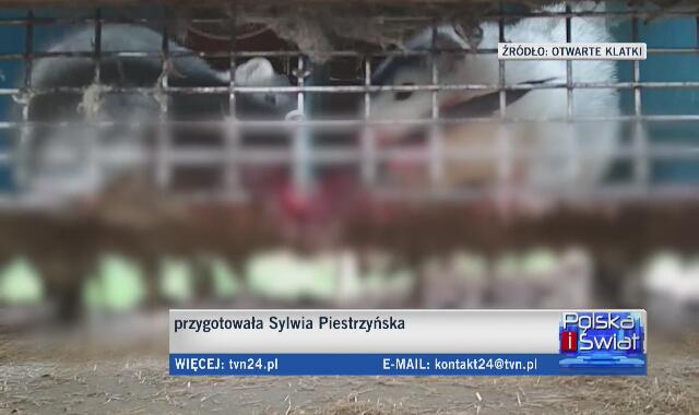 PiS chce zamknięcia ferm futrzarskich